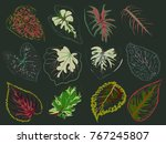 Vector Set Of Patterned Red And ...