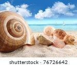 Group Of Seashells On The Beach