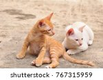 Stock photo little white cat and brown are fun to play with 767315959
