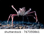 giant spider crab on black... | Shutterstock . vector #767350861