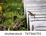 a tiny lizard paying attention... | Shutterstock . vector #767366701