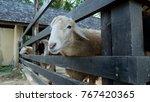 close up sheep | Shutterstock . vector #767420365