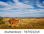 bengal tiger in natural habitat.... | Shutterstock . vector #767421214