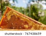 closeup portrait of beekeeper...   Shutterstock . vector #767438659