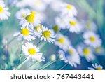 nature background. butterfly... | Shutterstock . vector #767443441