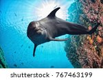 dolphin underwater on reef...   Shutterstock . vector #767463199