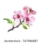 Flowering Cherry Tree. Pink...