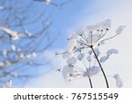 wonderful winter scenery   Shutterstock . vector #767515549