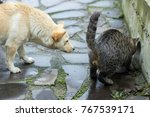 a white dog and a tabby cat... | Shutterstock . vector #767539171