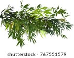 illustration with green bamboo... | Shutterstock .eps vector #767551579