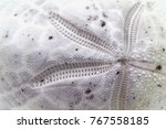 sea shell macro photo. seashore ... | Shutterstock . vector #767558185