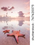 two starfish on sea beach at... | Shutterstock . vector #767620375