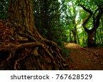 licky hills in west midlands in ... | Shutterstock . vector #767628529