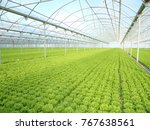 Green House And Green Vegetable