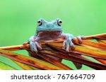 tree frog  dumpy drog | Shutterstock . vector #767664709