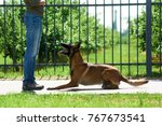the dog is lying down by the... | Shutterstock . vector #767673541