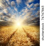 field with gold barley and road in sunset - stock photo