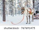 reindeer safari in a winter... | Shutterstock . vector #767691475