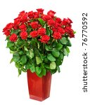 Stock photo big bunch of roses 76770592