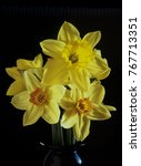 Small photo of Daffodil Narcissus is a genus of mainly hardy, mostly spring-flowering, bulbous perennials in the Amaryllis family, subfamily Amaryllidoideae