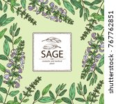 background with sage  branch of ... | Shutterstock .eps vector #767762851