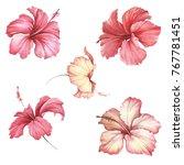 set with flowers hibiscus. hand ... | Shutterstock . vector #767781451