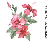composition with hibiscus. hand ... | Shutterstock . vector #767781457