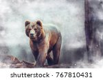 north american brown bear.... | Shutterstock . vector #767810431