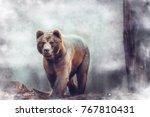 north american brown bear.... | Shutterstock . vector #767810431