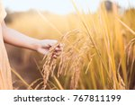 child hand holding young rice... | Shutterstock . vector #767811199