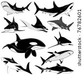 set of various sharks  tattoo | Shutterstock .eps vector #76782601