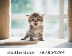 Stock photo cute persian kitten sitting on cat tower 767854294