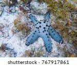 Blue Star Fish On White Sand...