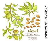 almond branches vector set on... | Shutterstock .eps vector #767935921