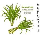 lemongrass plant vector...   Shutterstock .eps vector #767937517