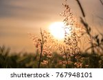 silhouette of grass and... | Shutterstock . vector #767948101