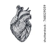 realistic human heart. vintage... | Shutterstock .eps vector #768029059