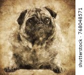 cute fawn pug dog laying on the ... | Shutterstock . vector #768048571