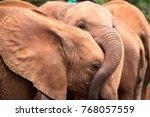 baby elephants at an elephant... | Shutterstock . vector #768057559