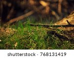 Small photo of Macro proto of grass and branches