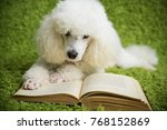 a white dog on a green carpet... | Shutterstock . vector #768152869