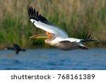 white pelican in flight | Shutterstock . vector #768161389