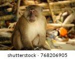 Starring Monkey At Phi Phi...