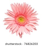 Close Up Of  Daisy Flower On...