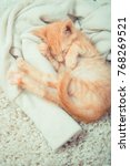 Stock photo little red kitten cat lies on the fluffy carpet at home little kitten sleeps close up of 768269521
