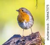 cute red robin  erithacus... | Shutterstock . vector #768467575