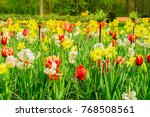 tulips and bluebell flowerbed | Shutterstock . vector #768508561