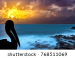 silhouette of a wild pelican... | Shutterstock . vector #768511069