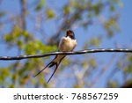 Small photo of Swallows sitting on wires and rest against the blue sky. Swallow bird in natural habitat.