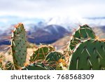 Small photo of Gunlock State Park cactii